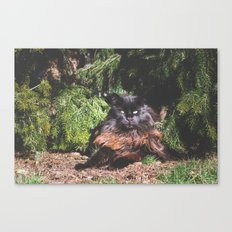 The king of the cats Canvas Print