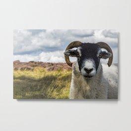Can I Help Ewe? Metal Print