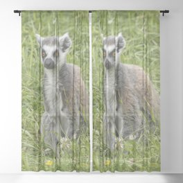 Beautiful ring-tailed lemur in the grass Sheer Curtain