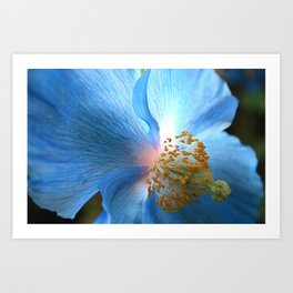 Blue Poppy Art Print