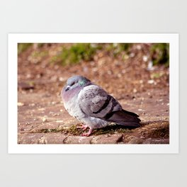Concept nature : The watchful dove Art Print