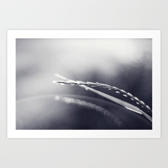Evening Light in Black and White Art Print