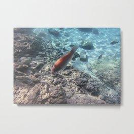 One Fish, Two Fish, Pink Fish, Blue Fish. Metal Print