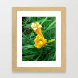 A Touch of Yellow Framed Art Print
