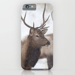 Watercolor Elk Juvenile 19, Estes Park, Colorado, Winter Paws iPhone Case