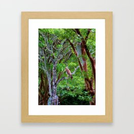 Hawk Watching Framed Art Print