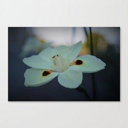 Unknow flower Canvas Print