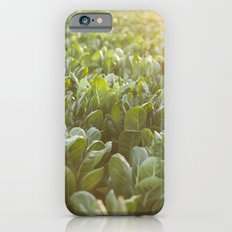 high quality photo, Colors of sunset - chards, high quality print, fine art print, still life, macro iPhone 6s Slim Case