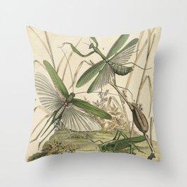 Grasshopper & Mantis Throw Pillow