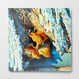 Mushrooms Hidden in a Tree Metal Print