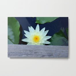 White Water Lily Under the Bridge Metal Print