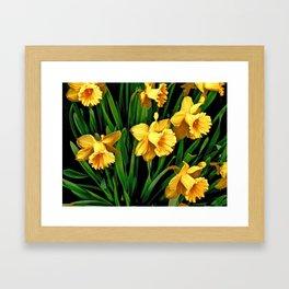 Bouquet Of Golden Spring Daffodils Framed Art Print