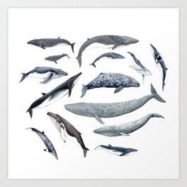 Whales all around Art Print