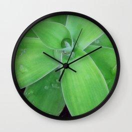 Agave with Raidrops Wall Clock