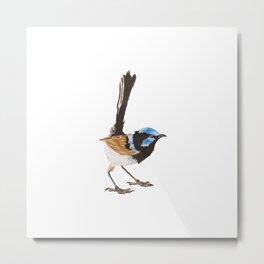 Superb Blue Fairywren Bird Metal Print