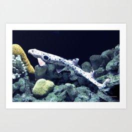 Epaulette Shark Art Print