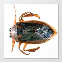 From the Rudy Rocha Home Collection: Waterbug bedbug, Waterbug shower bug Canvas Print
