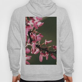 Cercis canadensis 'Forest Pansy' Hoody