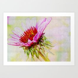 Dreamy Pink Coneflower Art Print