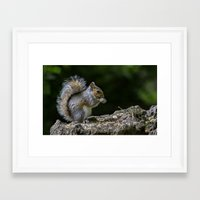 squirrel Framed Art Prints featuring Squirrel by Fine Art by Rina