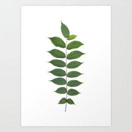 Green Leaf Botanical Print Art Print
