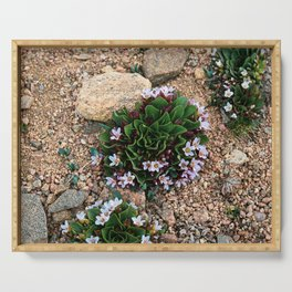 Alpine Spring beauty Colorado Serving Tray