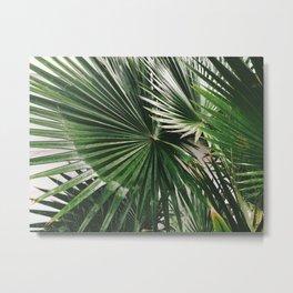 Fan Palms Metal Print