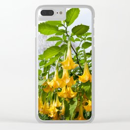Big yellow Brugmansia called Angels Trumpets Clear iPhone Case
