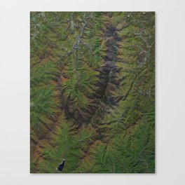 Blue Ridge Mountains North Carolina North America Canvas Print