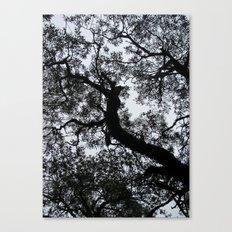 A Walk in the Clouds #3 Canvas Print