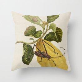 Maria Sibylla Merian Lemon Throw Pillow