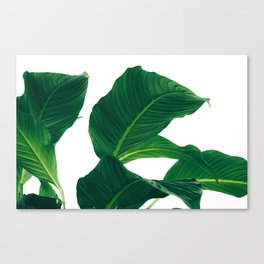 Green Leafs (Color) Canvas Print