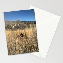 Abandoned wheel - Red Mountain, Glenwood Springs, CO Stationery Cards