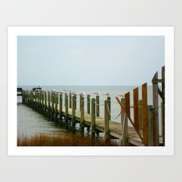 Seagulls on the Outer Banks Dock Art Print