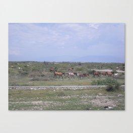 Horses in Haiti Canvas Print