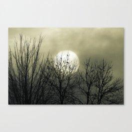 Winter Into Spring Canvas Print