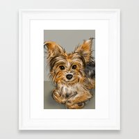 yorkie Framed Art Prints featuring Yorkie by Sam Bock