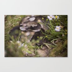 Easter babies Canvas Print