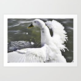 Getting Ready To Fly Art Print