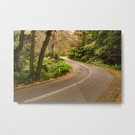 Mount Wilson, Blue Mountains Metal Print