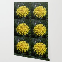 Dandelion flower and seed Wallpaper