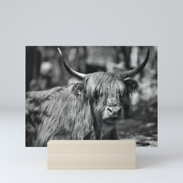Scottish highlander cow in the woods!  Mini Art Print