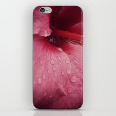 Tender Pink iPhone & iPod Skin