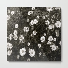 My Lazy Daisy Metal Print