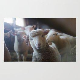 Sheep Looking at Camera Rug