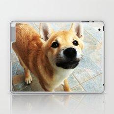 Shiba Inu Laptop & iPad Skin