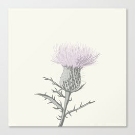 PASTEL THISTLE FLOWER Canvas Print