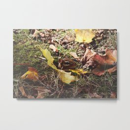Chipmunk VI Metal Print