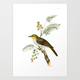 Yellowthroated Bulbul Jerdon Art Print