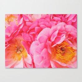 Hot Pink Peony Canvas Print